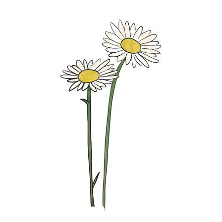 Dibujado a mano margarita flor, vector.