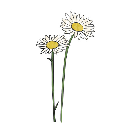 Hand drawn daisy flower, vector. 版權商用圖片 - 96071774