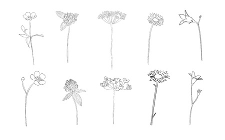 Hand drawn wild flowers in summer, vector. Vettoriali