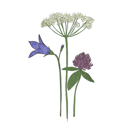 Hand drawn wild flowers in midsummer, vector.