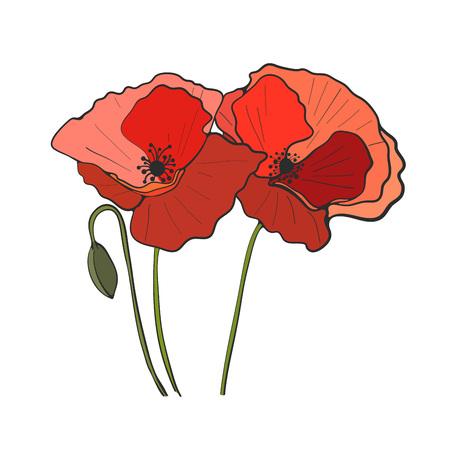 Hand drawn poppy flower, vector Vettoriali