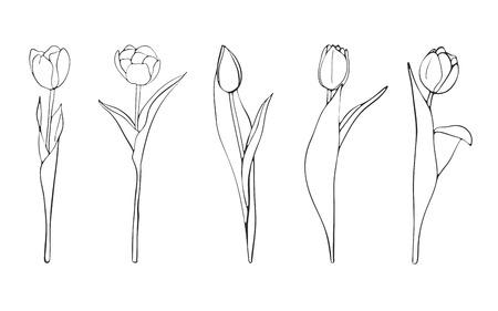 Croquis de tulipes dessinés à la main, vecteur