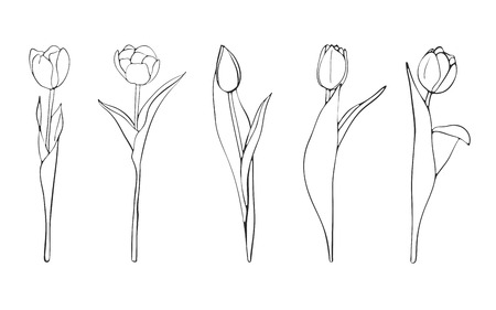 Hand drawn tulips sketch, vector