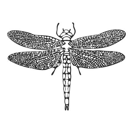 Linea arte libellula schizzo, vettoriale Vettoriali
