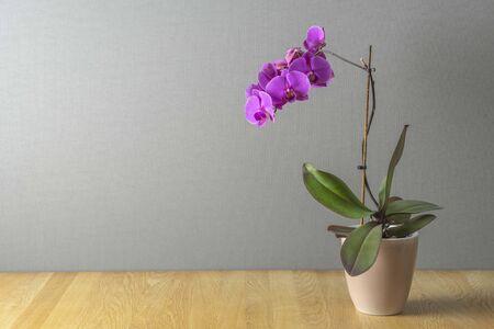 Rosa Orchidee auf einem Tisch