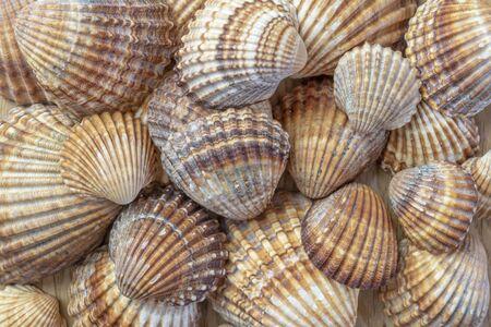Seashell in macro background 写真素材