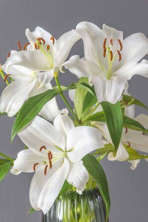 White lilies in macro 写真素材