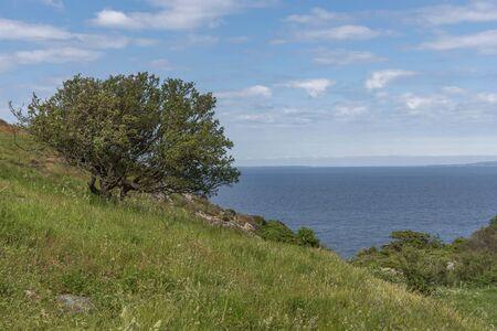 Kullaberg nature reserve in Sweden