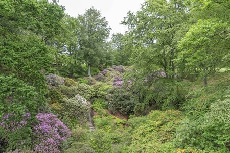 Park in Sofiero with rhododendron