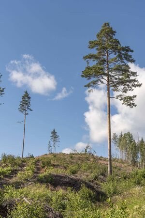 Newly clear cut forest