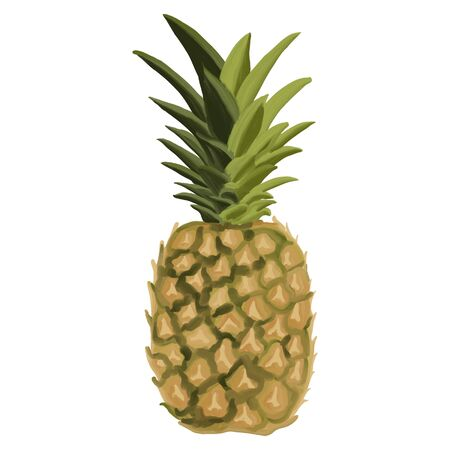 Tropical pineapple fruit in oil, vector