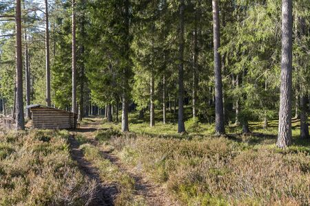 Path by wooden hut in forest