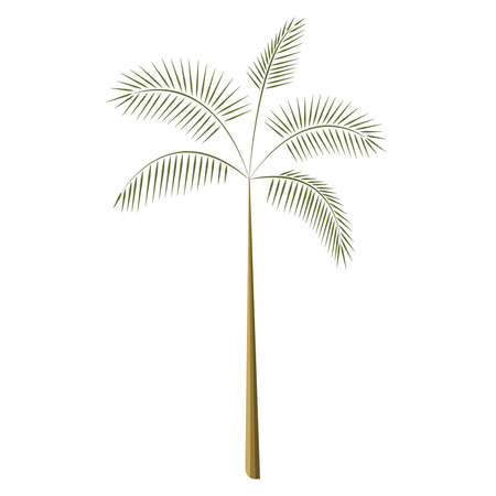Palm tropical tree isolated vector Ilustracja