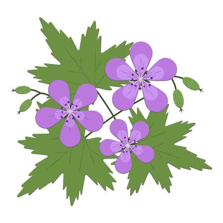 Woodland geranium midsummer flower vector