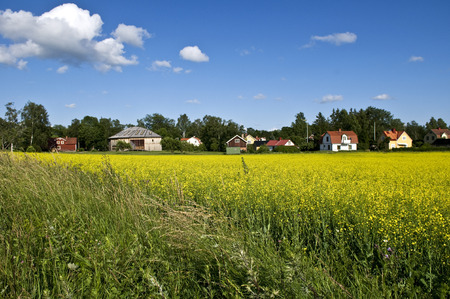 scandinavian landscape: Traditional red Swedish country houses surrounded with rape fields and green trees. A typical Scandinavian summer landscape, with blue sky, white clouds, and bright sun. Stock Photo