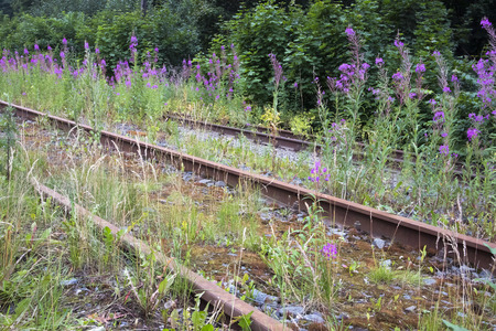 Old rusty abandoned railways overgrown with willow-herb bushes and moss