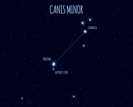 Canis Minor (The Lesser Dog) constellation, vector illustration