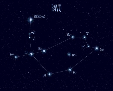 Pavo (The Peacock) constellation, vector illustration