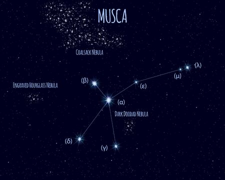 Musca (The Fly) constellation, vector illustration