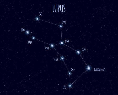 Lupus (The Wolf) constellation, vector illustration