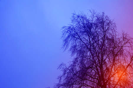 The silhouette of bare birch tree against winter sky and sun glare behind, art processed image