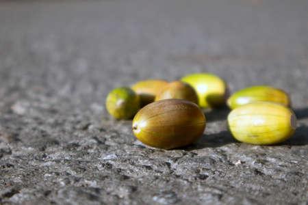 Few multicolored unripe acorns lying on the gray dry asphalt, autumn background