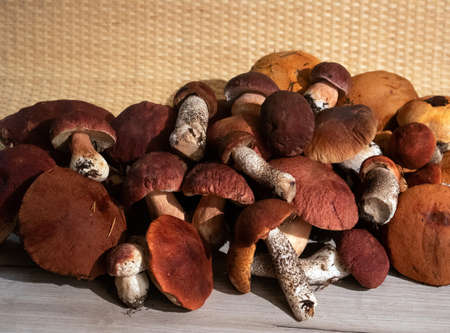 A pile of noble forest mushrooms boletus and red cap boletus lying on a wooden board
