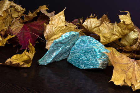 Stil life with beautiful bright pieces of raw semiprecious mineral amazonite and autumn maple leaves
