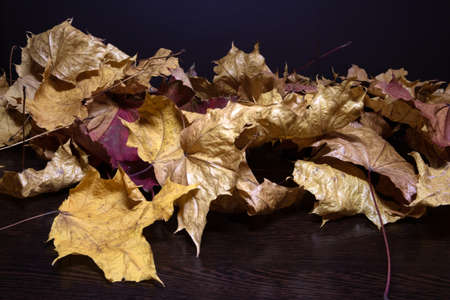 A pile of withered twisted maple leaves with light reflection lying on a dark wooden surface