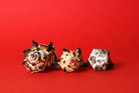 Three decorative sea shells of different sizes isolated on bright red background Фото со стока
