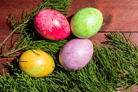 Four multicolored bright easter eggs and thuja branch lying on red wood surface
