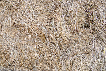 Dry straw texture, large hay stack after harvest season close up, natural background