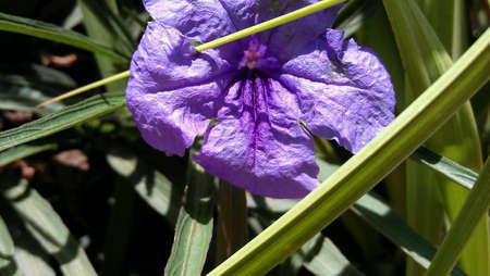htc: I saw this beautifull flower in my garden. I Quickly  captured through my htc sensation.