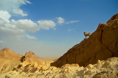mountain goats: stone mountain goats in the valley, desert Africa