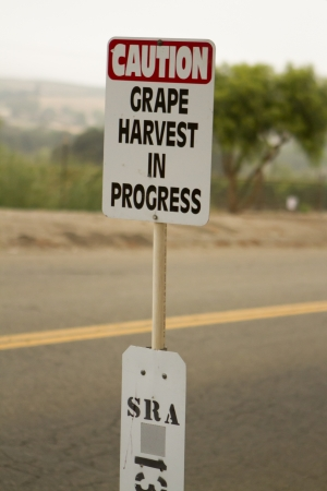 wine road: Caution, grape harvest in progress sign on rural road. Stock Photo