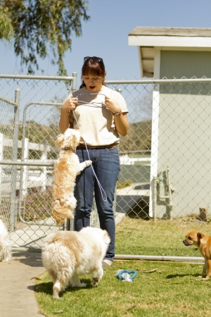 A kennel worker plays with several small dogs Stock Photo - 20139795