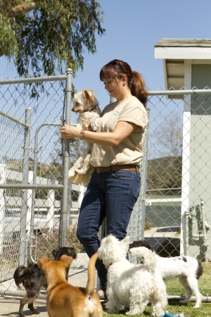 A kennel worker plays with several small dogs  photo