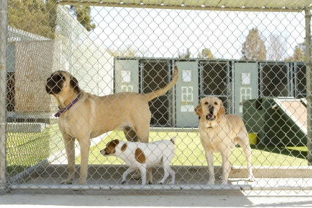 enclosures: Large and small dogs in a pet boarding facility