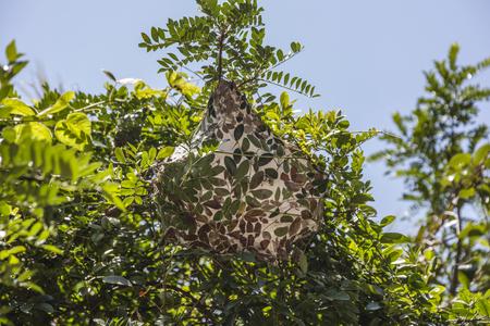새의 둥지 스톡 콘텐츠 - 88311045