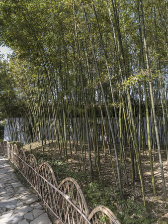 Suzhou garden with bamboo forest