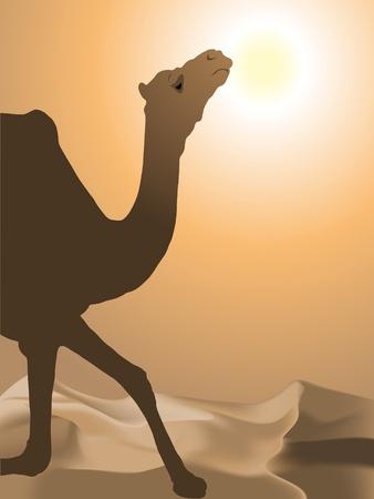 Camel in the desert Vector