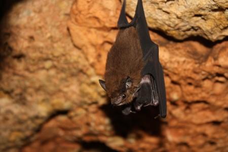 bats: Mother Bat cradling Baby Bat