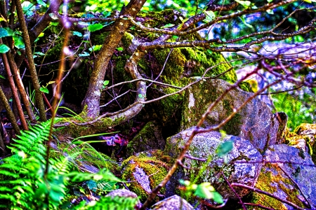 inclined: Summer paysage in strong colors stones with detailed lichen,green fern,inclined crook tree,wild nature Stock Photo