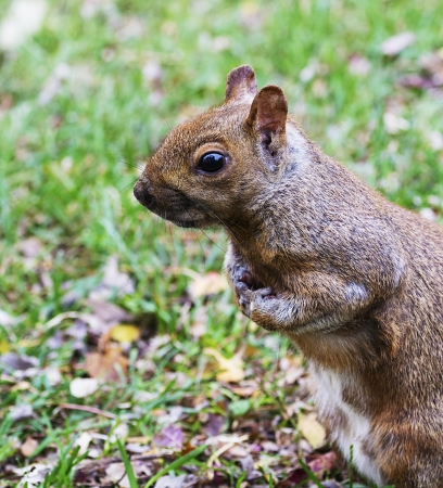 Squirrel crossed his arms waiting for picture