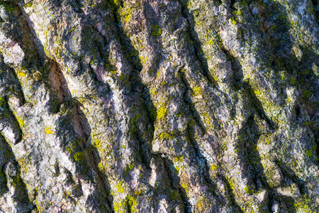 material: Construction material with lichen macro Stock Photo