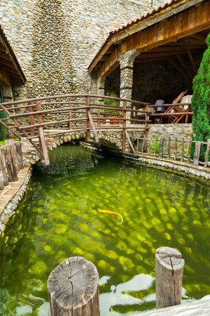 Small lake with green water and golden fish inside of it photo