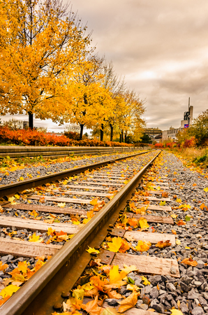 old port: Railway covered by yellow autumn foliage and surrounded by trees and buches going to Montreal Old Port