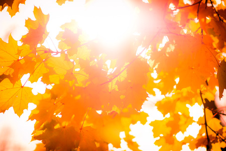 Yellow and red autumn foliage at sunrise