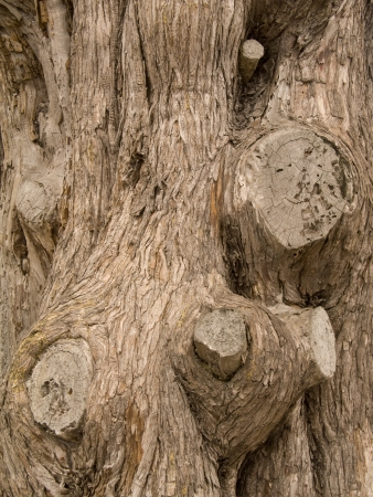 Close-up vertical textured pattern of tree bark with knots