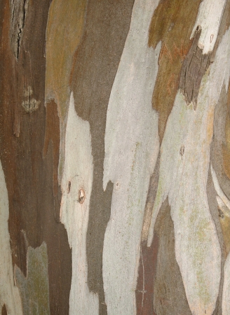 Vertical textured pattern of stripped tree bark photo